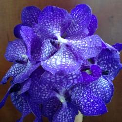 Buchete de mireasa realizat din orhidee vanda mov