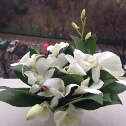 Aranjament floral cu orhidee dendrobium
