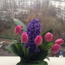 Aranjament floral cadou in cosulet